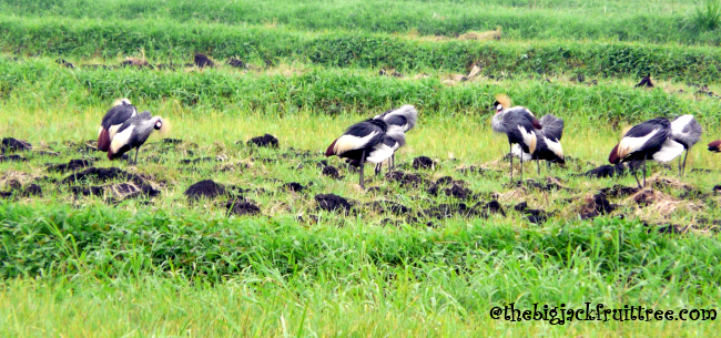 flock closer