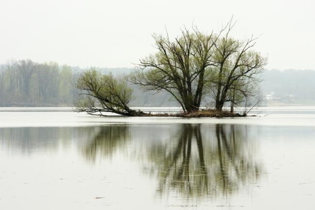 Wetland2