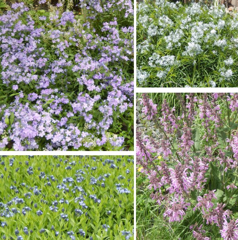 hl-flowers