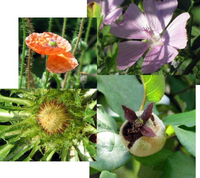 CMG-flowers