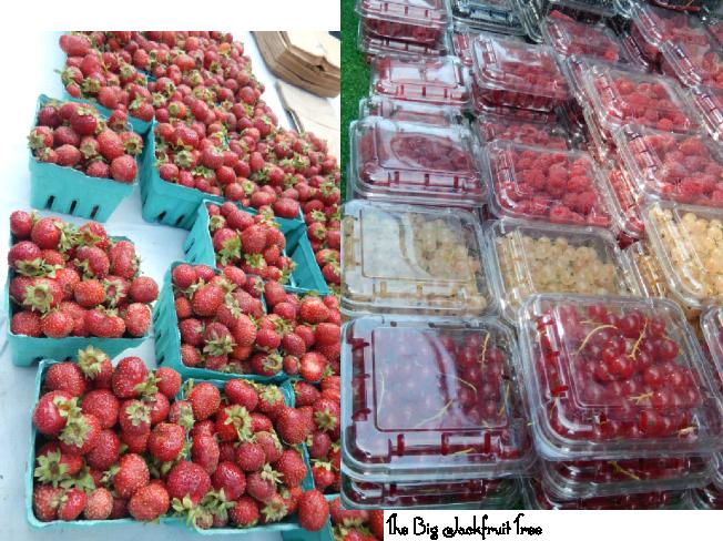 USGMR-berries