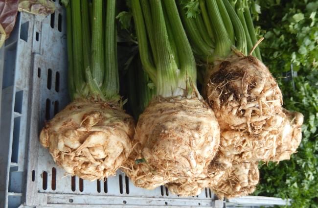 USGMR-celery-root
