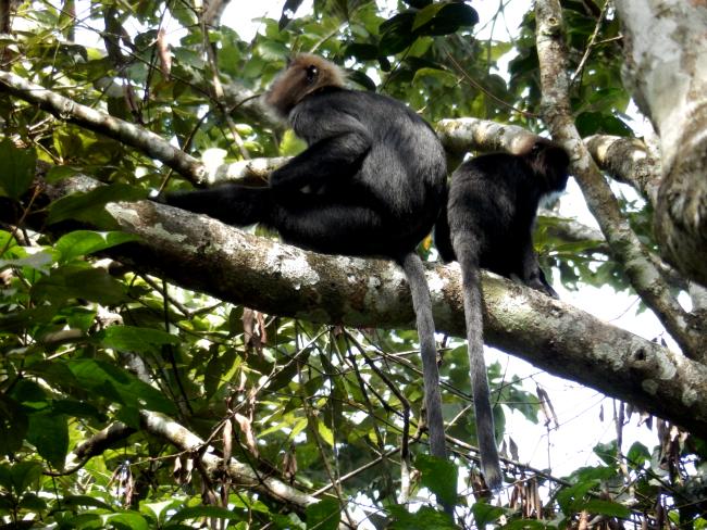 ABNYWNE-black-monkey