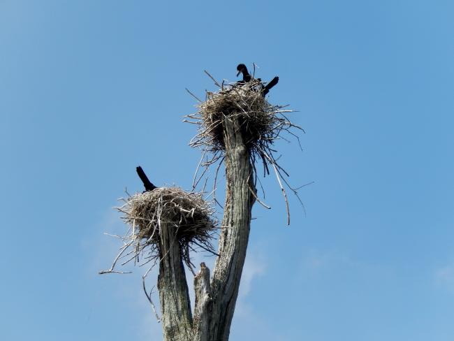 ABNYWNE-nest-on-stump