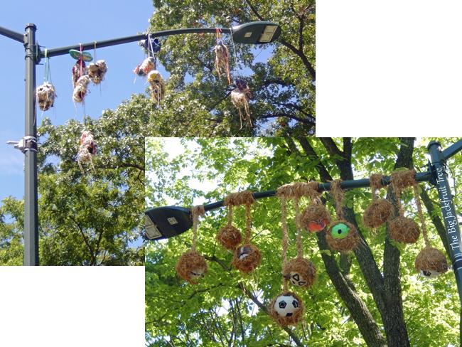 DDCP-bird-nest